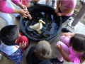 Young kids enjoy bathing a duck with help from SSU students