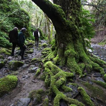 Land trust volunteers hiking under a tree