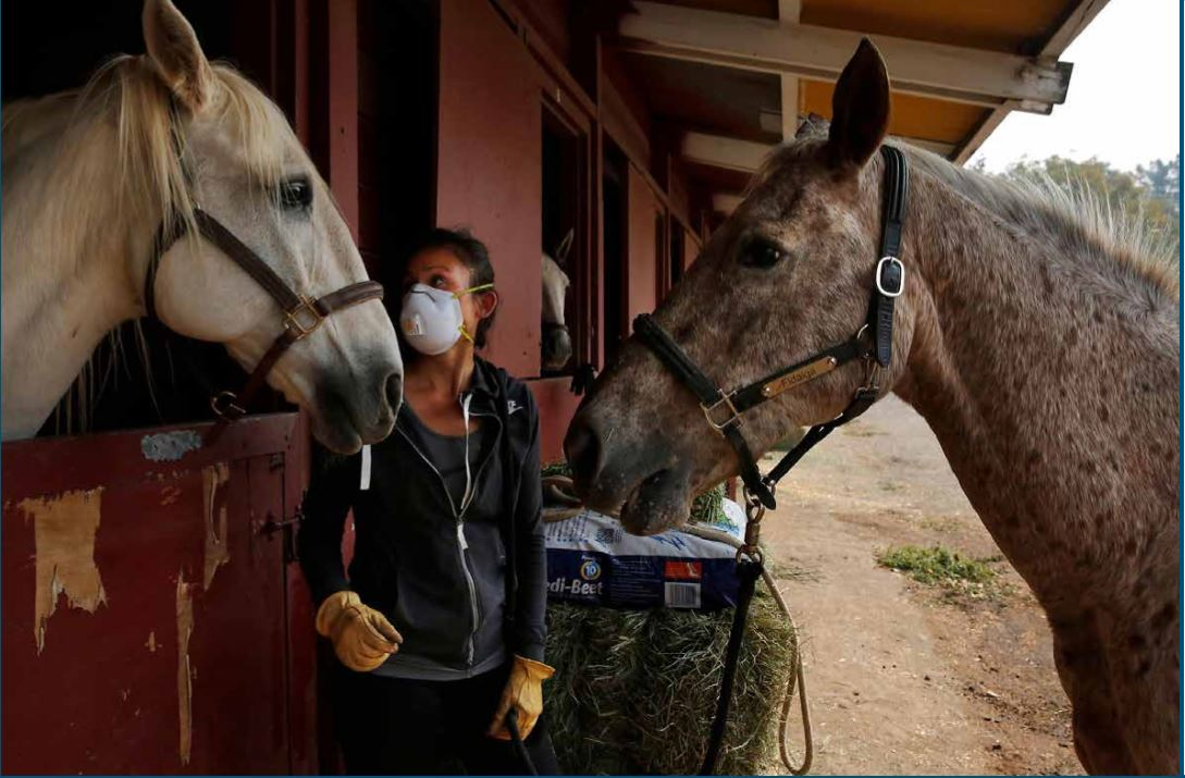 a person with an N95 mask with two horses